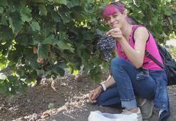 ATO, yabancı temsilcilere Kalecik karası üzümünü tanıttı