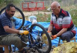 Ayçekirdeği hasadını bisikletle yapan çiftçiler görenleri şaşırtıyor