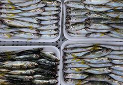 Rusyaya balık ihracatı arttı