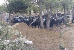 Gerçek günler sonra ortaya çıktı Afgan çoban...