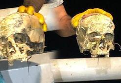 Korkunç manzara Ağa insan kafatası takıldı