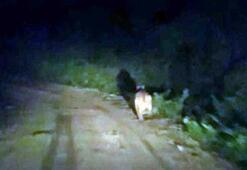 Köylere inen ayılar halkı tedirgin etti
