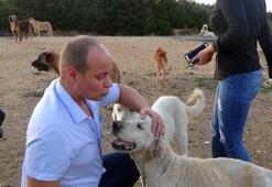 Çatalcada ormana bırakıp terk edilen köpekler gün geçtikçe artıyor