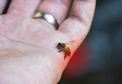 Eşek arısının soktuğu kadın 5 gün sonra öldü