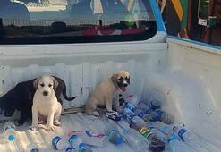 Ormana terk edilen yavru köpeklere belediye sahip çıktı
