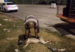 Aracın çarptığı yaralı köpeğe tedavi
