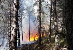 Ankarada 10 hektar orman yandı