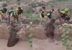 Çukurda mahsur kalan geyiği bisikletçiler kurtardı
