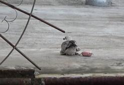 Ayağına olta şamandırası takılan martının çaresiz çırpınışı