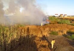 Bigada sazlıkta çıkan yangın korkuttu
