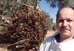 Firari arılar, 3 ay sonra böyle bulundu