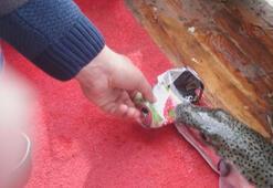 Şoke etti Canavar balık teneke kutuyu parçaladı