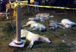16 köpeği zehirleyen 3 sanık duruşmaya gelmezse tutuklanacak