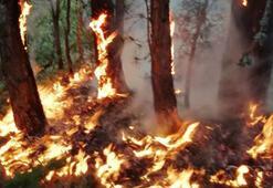 Çorumda orman yangını