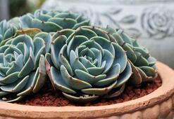 Sonbaharda çok su istemeyen 5 salon bitkisi