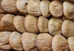 Kuru incir üretimi rekora koşuyor