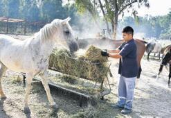 Fayton atları Doğal Yaşam'da