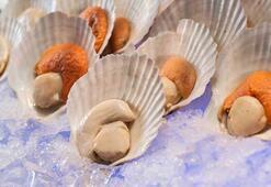 Deniz tarağı yenir mi, nasıl temizlenir (Muhteşem deniz tarağı tarifi ile)