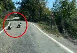 Sinopta yavru ayılar güpegündüz böyle görüntülendiler