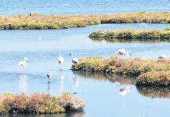 Flamingolar görsel şölen oluşturdu