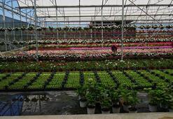 Süs bitkilerinde 125 milyon dolarlık ihracat hedefi
