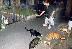 Sokak hayvanlarını besleyene 'yardım fonu'