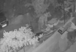 Konyada evin balkonuna çıkan boz ayı, güvenlik kamerasında