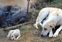 6 yavrusu telef olan köpek, olay yerinden ayrılmadı
