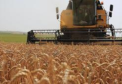 Rusyadan tahıl OPECi kurulsun önerisi