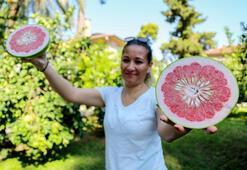 Turunçgillerin atası pomelo, sadece Antalyada yetişiyor