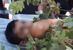 Ağaçtan düşen çocuğun koluna demir korkuluk saplandı