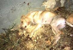 Korkunç Sokak köpeğini işkenceyle öldürdüler