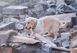 Köpekler depremi önceden hisseder mi
