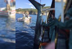 Köpek balığına tekme atan balıkçıya 773 lira ceza