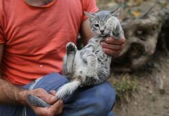 Üç ayaklı doğan kedi mahalle sakinlerinin ilgi odağı haline geldi