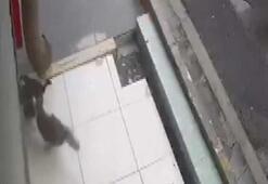 Başı kepenge sıkışan kedi diğer kedi sayesinde kurtarıldı