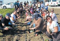 Balıkesir'de ünlüler çiftçiliği öğreniyor