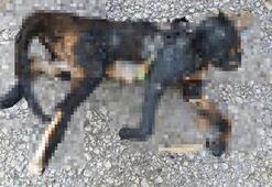 Temizlik işçileri, yakılarak telef edilen kedi buldu