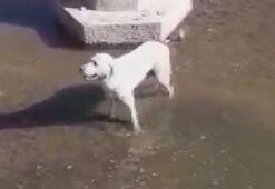 Köpek kurtarma operasyonunu anlattı; sosyal medya yıkıldı