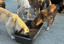 Hayvanları toplatmıştı... Belediyeye suç duyurusu