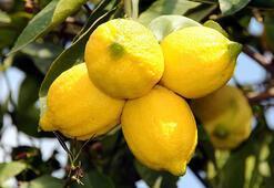 Ekşi limondan tatlı gelir