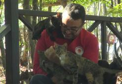Kedi Kasabasında kedilerin keyfine diyecek yok