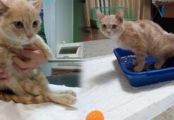 Havalı tabanca ile 9 el ateş edilen yavru kediye hayvan severler sahip çıktı