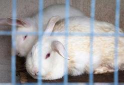 Vegan aktivistlerin eylemi yüzünden tavşanlar felç oluyor