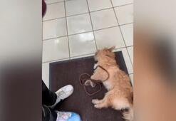 Ölmek üzere olan köpeği tedavi etmedi