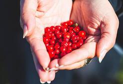Kan şekeri ile insülini dengeleyen meyve: Kekreyemiş