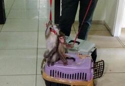Sosyal medya üzerinden maymun satmaya çalışan şahıs yakalandı