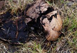 Meksikada 42 kafatası ve kemik parçaları bulundu