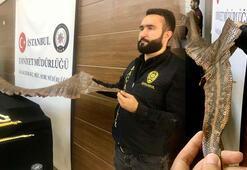 Polisler şoke oldu 4 metre 60 santim... Değeri 1,5 milyon lira