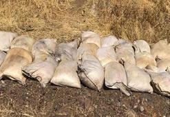 1 ton bulundu Hemen yok edildi...